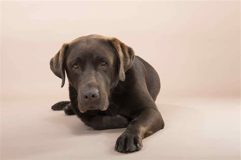 Dog Care - Conditions, Treatments, Symptoms, Nutrition