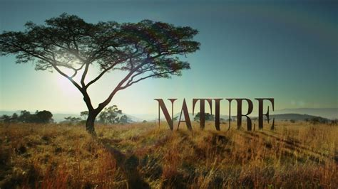 Inside NATURE's New Opening Sequence | Blog | Nature | PBS
