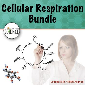 Cellular Respiration Bundle by Amy Brown Science | TpT