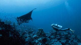 Discover the Great Barrier Reef via superyacht | Boat