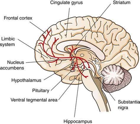 Neurobiology of Schizophrenia, Mood Disorders, and Anxiety