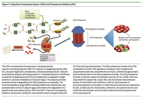 59 questions with answers in PROTEASOME | Science topic