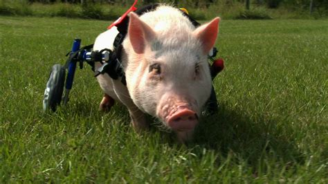 My Bionic Pet | About | Nature | PBS