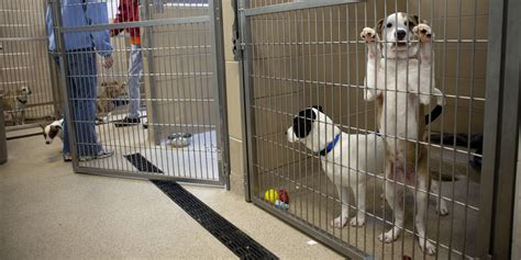 No-Kill Animal Sheltering Is Coming Soon to a Community